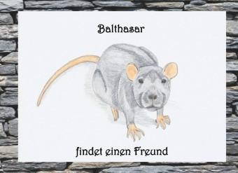 Balthasar findet einen Freund