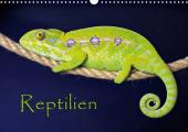 Reptilien (Wandkalender 2021 DIN A3 quer)