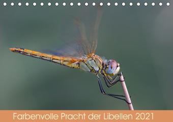 Farbenvolle Pracht der Libellen (Tischkalender 2021 DIN A5 quer)