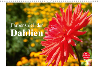 Farbenspiel der Dahlien (Wandkalender 2021 DIN A3 quer)