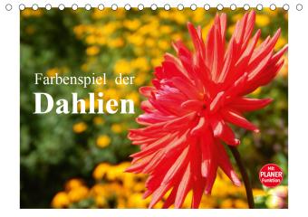 Farbenspiel der Dahlien (Tischkalender 2021 DIN A5 quer)