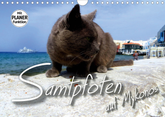 SAMTPFOTEN auf Mykonos (Wandkalender 2021 DIN A4 quer)
