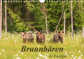 Braunbären in Europa (Wandkalender 2021 DIN A4 quer)