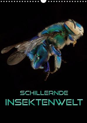 Schillernde Insektenwelt (Wandkalender 2021 DIN A3 hoch)