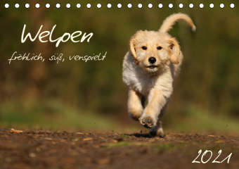 Welpen - fröhlich, süß, verspielt (Tischkalender 2021 DIN A5 quer)