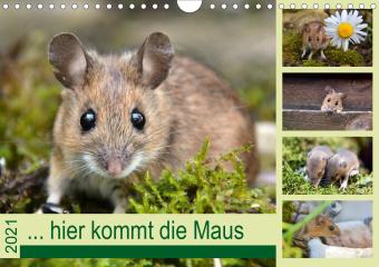 ... hier kommt die Maus ... (Wandkalender 2021 DIN A4 quer)