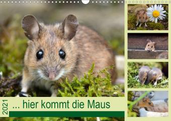 ... hier kommt die Maus ... (Wandkalender 2021 DIN A3 quer)