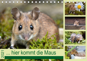 ... hier kommt die Maus ... (Tischkalender 2021 DIN A5 quer)