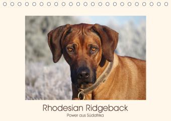 Rhodesian Ridgeback Power aus Südafrika (Tischkalender 2021 DIN A5 quer)