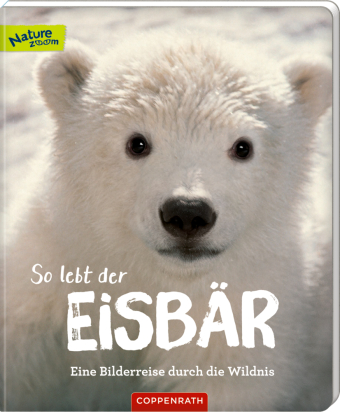 So lebt der Eisbär