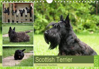 Scottish Terrier - Charmantes Rauhbein (Wandkalender 2021 DIN A4 quer)