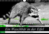 Ein Waschbär in der Eifel (Wandkalender 2021 DIN A4 quer)