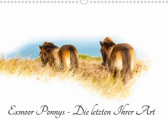 Exmoor Ponnys - Die letzten Ihrer Art (Wandkalender 2021 DIN A3 quer)