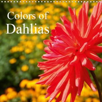 Colors of Dahlias (Wall Calendar 2021 300 × 300 mm Square)