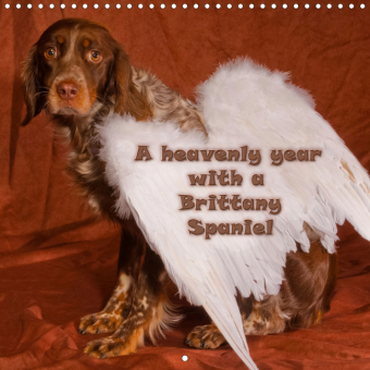 A heavenly year with a Brittany Spaniel (Wall Calendar 2021 300 × 300 mm Square)