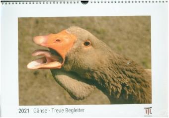 Gänse - Treue Begleiter 2021 - White Edition - Timokrates Kalender, Wandkalender, Bildkalender - DIN A3 (42 x 30 cm)
