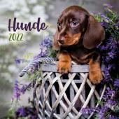Trötsch Broschürenkalender Hunde 2022