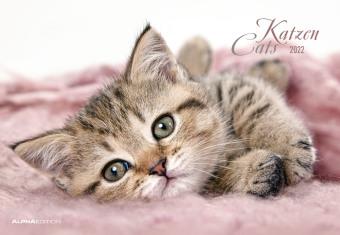 Katzen 2022 - Bildkalender 42x29 cm (42x58 cm geöffnet) - Cats - mit Feiertagen (DE/AT/CH) und Platz für Notizen - Wandp