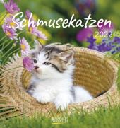 Schmusekatzen 2022